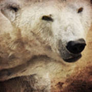 The Polar Bear Poster by Angela Doelling AD DESIGN Photo and PhotoArt