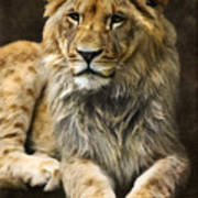 The Young Lion Poster by Angela Doelling AD DESIGN Photo and PhotoArt
