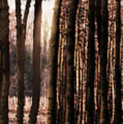 Trees Gathering Poster by Wim Lanclus