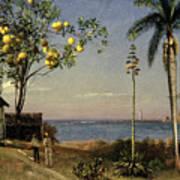 Tropical Scene Poster by Albert Bierstadt