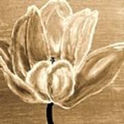 Tulip In Brown Tones Poster by Marsha Heiken