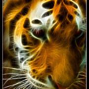 Turbulent Tiger Poster by Ricky Barnard