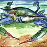 Tybee Blue Crab Poster by Doris Blessington