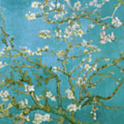 Van Gogh Blossoming Almond Tree Poster by Vincent Van Gogh