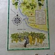 Vinedos Tio Pepe - Jerez De La Frontera Poster by Juergen Weiss