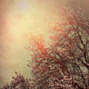 Vintage Cherry Blossom Poster by Wim Lanclus