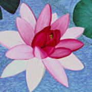 Water Lilly Poster by Loraine LeBlanc