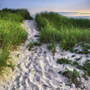 Wellfleet Beach Path Poster by Tammy Wetzel