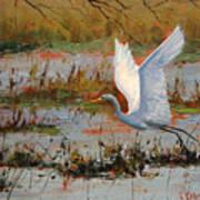 Wetland Heron Poster by Graham Gercken