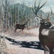 Whitetail Deer Poster by Ben Kiger