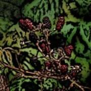 Wild Berries Poster by David Lane