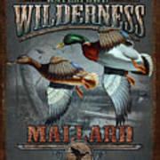 Wilderness Mallard Poster by JQ Licensing