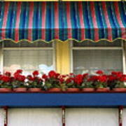 Window Box Geraniums Poster by Colleen Kammerer