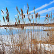 Winter In The Salt Marsh Poster by Catherine Reusch  Daley