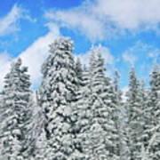 Winterscape Poster by Jeff Kolker