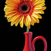 Yellow Fancy Daisy In Red Vase Poster by Garry Gay