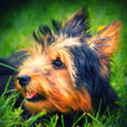 Yorki Poster by Angela Doelling AD DESIGN Photo and PhotoArt