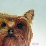 Yorkshire Terrier Poster by Dick Larsen