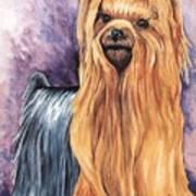 Yorkshire Terrier Poster by Kathleen Sepulveda