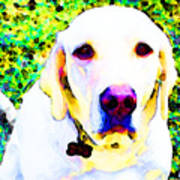 You Are My World - Yellow Lab Art Poster by Sharon Cummings