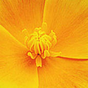 A Study In Yellow- Centerpiece 003 Print by George Bostian