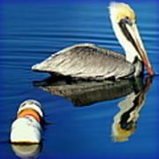 Blues Pelican Print by Karen Wiles