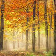 Autumn Gold Print by Ian Hufton