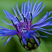 Blue Print by Jerri Moon Cantone