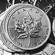 Canadian One Ounce Maple Leaf Silver Coins Print by Joe Fox