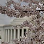 Cherry Blossoms With Jefferson Memorial - Washington Dc - 01134 Print by DC Photographer