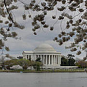 Cherry Blossoms With Jefferson Memorial - Washington Dc - 01137 Print by DC Photographer