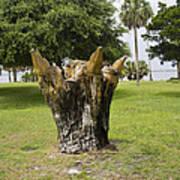 Dolphin Tree In Melbourne Beach Florida Print by Allan  Hughes
