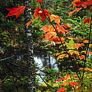 Fall Forest And River Print by Elena Elisseeva
