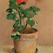 Geraniums In A Pot Print by Odilon Redon