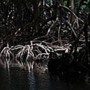 Mangrove Forest Of The Los Haitises National Park Dominican Republic Print by Andrei Filippov