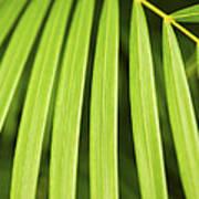 Palm Tree Leaf Print by Elena Elisseeva