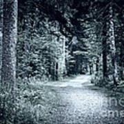 Path In Dark Forest Print by Elena Elisseeva