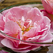 Pink Roses Print by Frank Tschakert