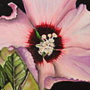 Rose Of Sharon Print by Karen Beasley