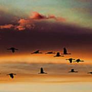 Sandhill Cranes Take The Sunset Flight Print by Bill Kesler