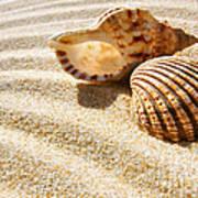 Seashell And Conch Print by Carlos Caetano