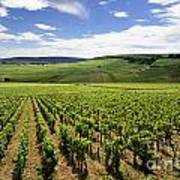 Vineyard Of Cotes De Beaune. Cote D'or. Burgundy. France. Europe Print by Bernard Jaubert