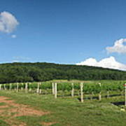 Vineyards In Va - 12127 Print by DC Photographer
