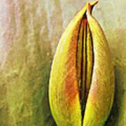 Tulip Print by Odon Czintos