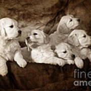 Vintage Festive Puppies Print by Angel  Tarantella
