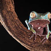 Tree Frog Print by Dirk Ercken