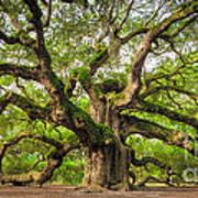 Angel Oak Tree Of Life Print by Dustin K Ryan