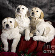 Festive Puppies Print by Angel  Tarantella