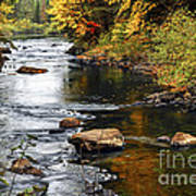 Forest River In The Fall Print by Elena Elisseeva