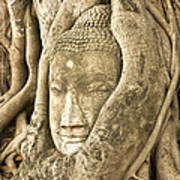Head Of Buddha Ayutthaya Thailand Print by Colin and Linda McKie